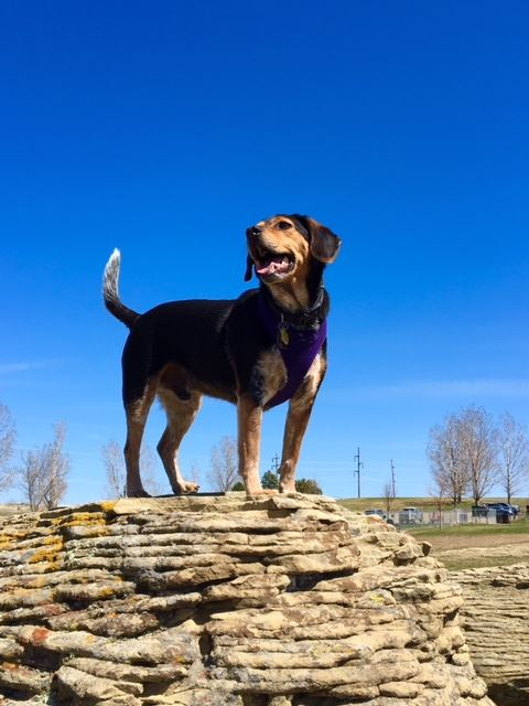 King at the HS DogPark | Janie Kokotan-Krauss